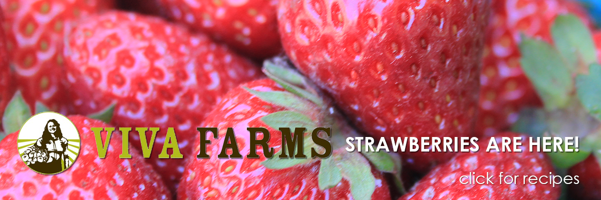 Viva Farms Strawberries are Here!